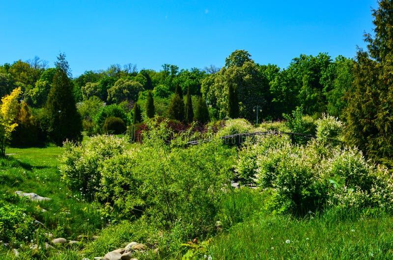 De aard van de lente Mooi landschap Park met Groene Gras en Bomen royalty-vrije stock foto