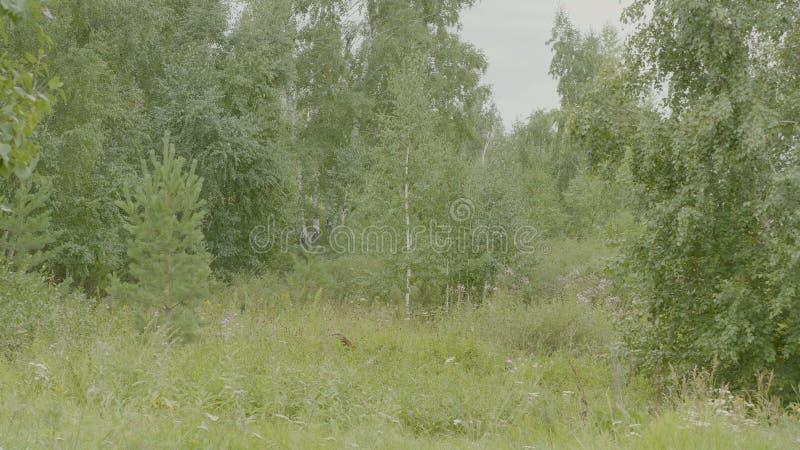 De aard van de lente Mooi landschap Park met Groene Gras en Bomen Rustige achtergrond Mooi in bos Groen stock fotografie