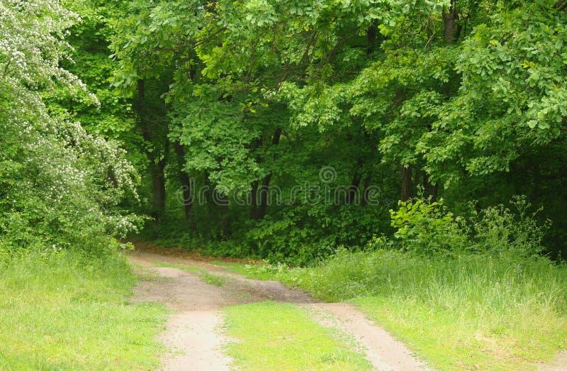 De aard van de lente Park met Groene Gras en Bomen royalty-vrije stock fotografie