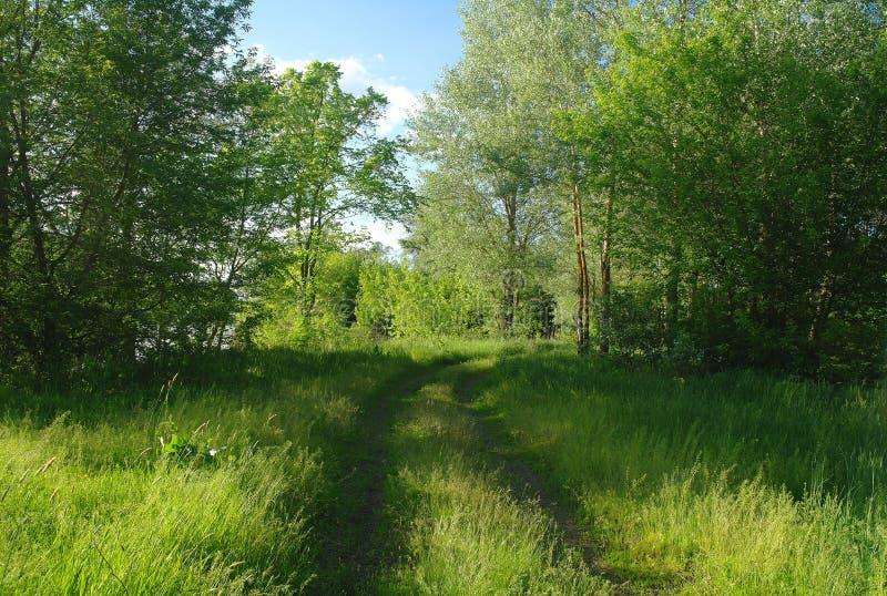 De aard van de lente Park met Groene Gras en Bomen royalty-vrije stock foto's