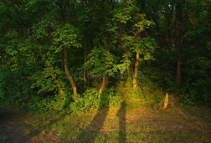De aard van de lente Park met Groene Gras en Bomen royalty-vrije stock foto