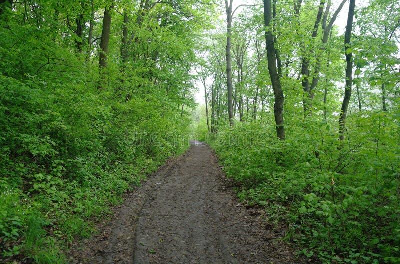 De aard van de lente Park met Groene Gras en Bomen royalty-vrije stock afbeeldingen