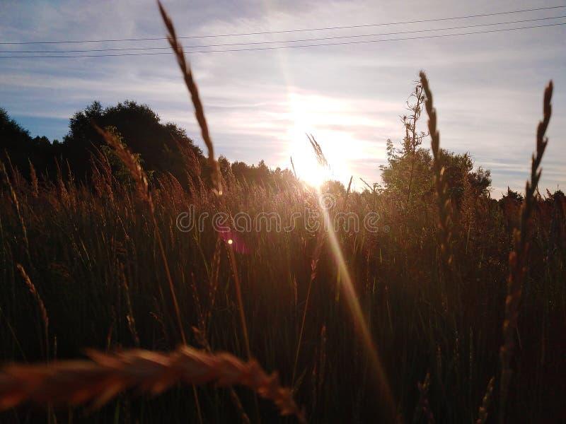 De aard van de zomer Gebied De stralen van de zon bij zonsondergang stock foto's