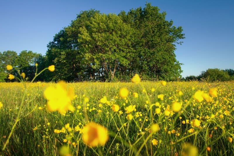 De aard van de zomer Weide met kruiden en bloemen op duidelijke dag Mooi vers aardlandschap Mooi wild gebied royalty-vrije stock afbeeldingen