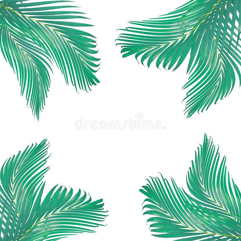 de aard verlaat kader voor tekst van groen geïsoleerd die palmblad wordt gemaakt stock afbeelding