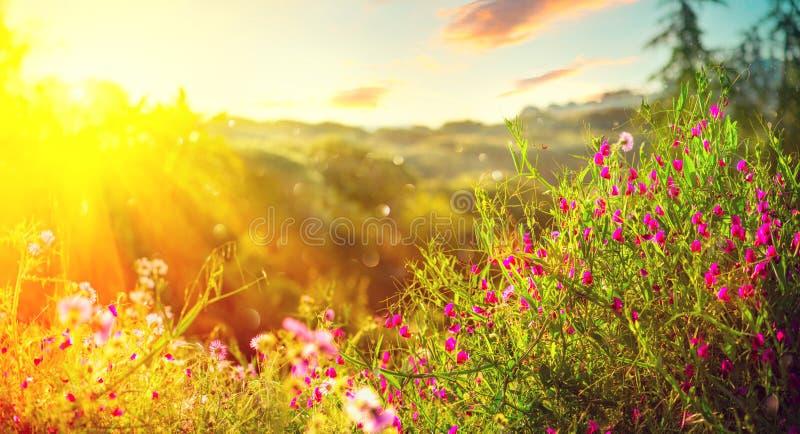 De aardachtergrond van de lente Mooi landschapspark met groen gras, bloeiende wilde bloemen en bomen royalty-vrije stock fotografie