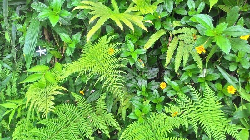 De aardachtergrond van de de lentezomer met gras, bomentak met groene bladeren stock afbeeldingen