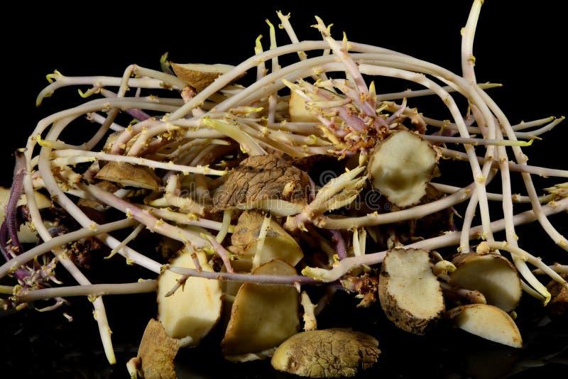 De aardappels in secties worden readied voor het planten gekubeerd die royalty-vrije stock afbeeldingen