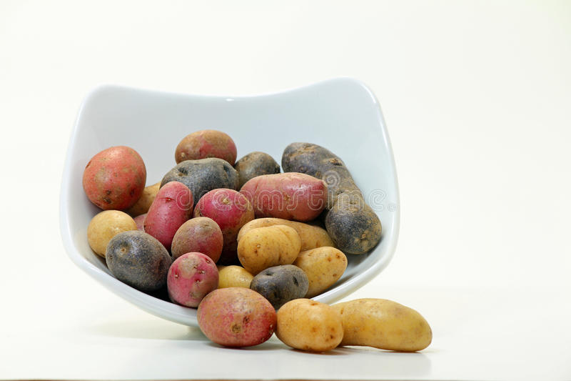 De Aardappels van de jonge vis (Solanum tuberosum) royalty-vrije stock afbeeldingen