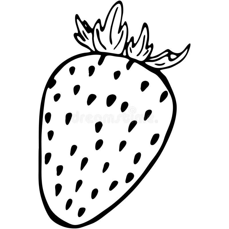 De aardbei van het overzichtsfruit vector illustratie