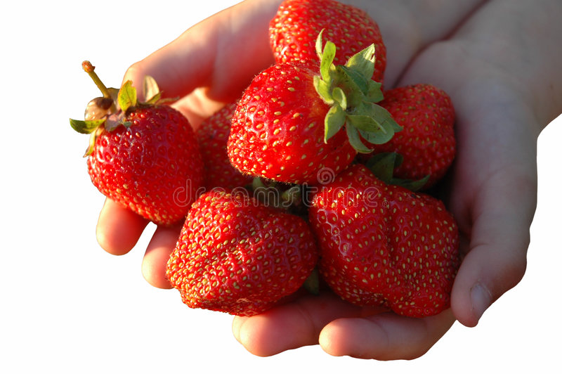 De aardbeien in palm. stock afbeelding