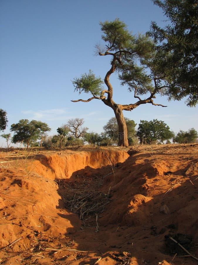 Download De Aarde van de moeder stock foto. Afbeelding bestaande uit afrika - 10778110