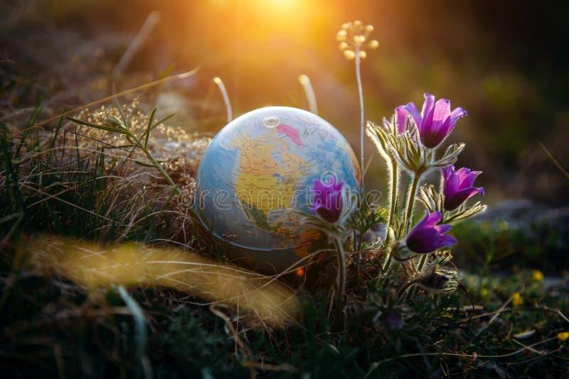 De aardebol in het gras naast mooie purpere bloemen sluit omhoog Het wekken van de planeet en de eerste de lentebloemen royalty-vrije stock fotografie