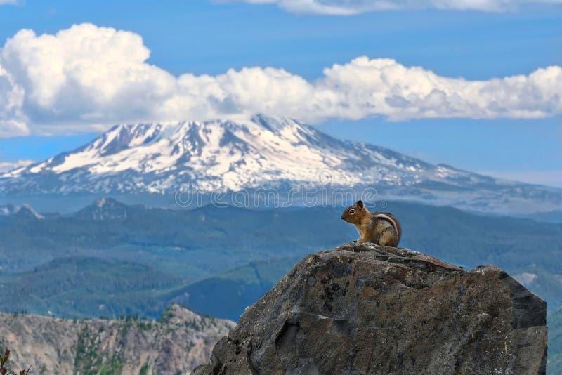 De aardeekhoorn voor afgedekte sneeuw zet Adams op stock foto's