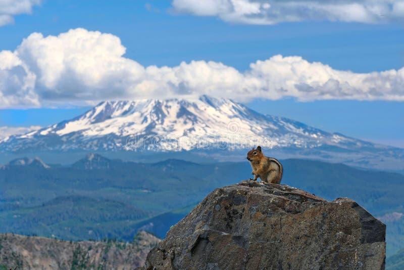 De aardeekhoorn voor afgedekte sneeuw zet Adams op royalty-vrije stock foto