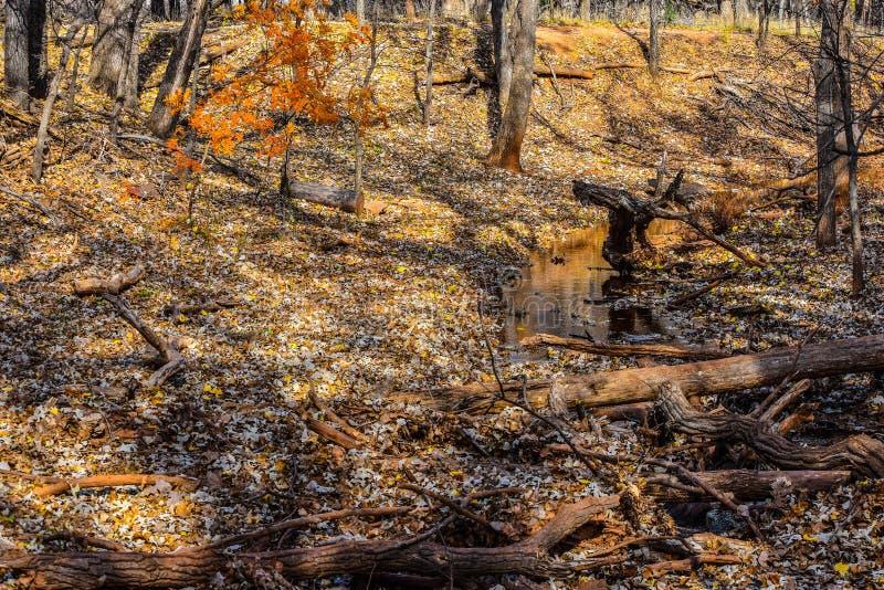 De aardpark van Martin in de herfst royalty-vrije stock foto's