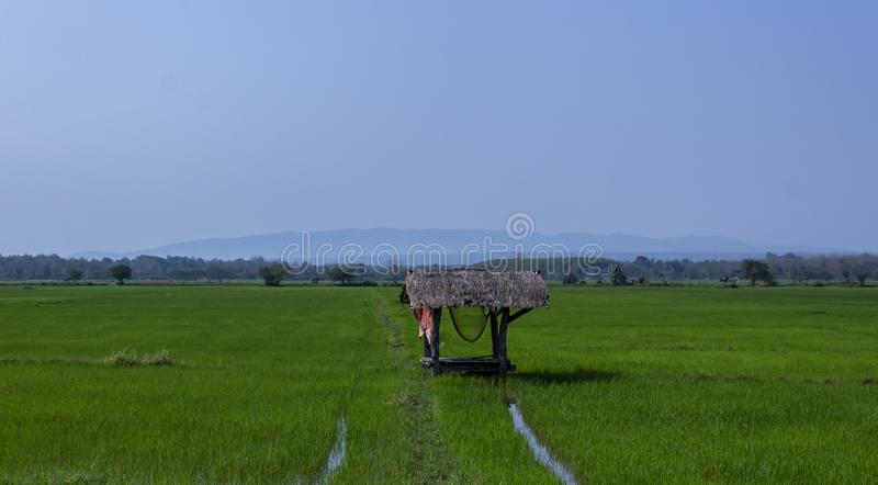 De aardplatteland van de padieveld mewdow padie stock foto's