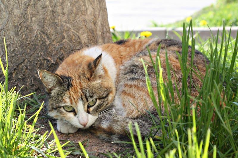 De aardwereld van het Catcat zoete huisdier royalty-vrije stock fotografie