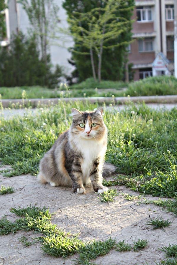 De aardwereld van het Catcat zoete huisdier stock foto