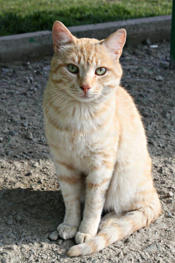 De aardwereld van het Catcat zoete huisdier royalty-vrije stock foto