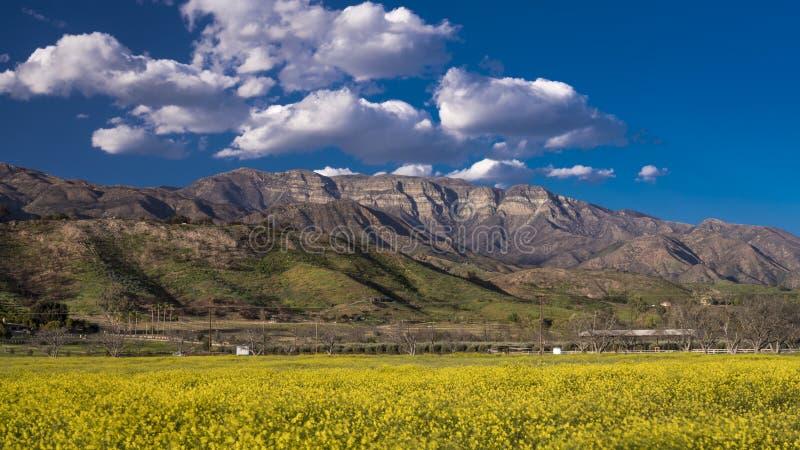 19 de abril de 2018 - OJAI CALIFÓRNIA - campo da mostarda e de montanhas amarelas de Topa Topa, Ojai superior Mola, ensolarada fotografia de stock royalty free