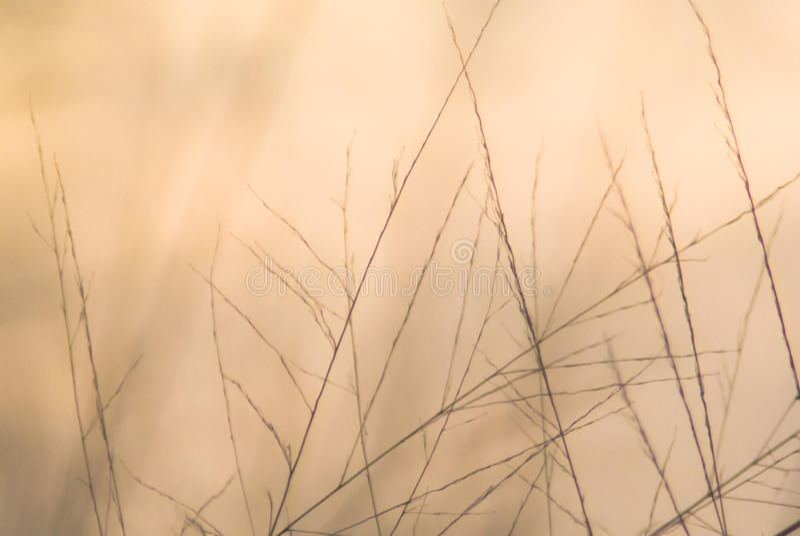 De abstracte Achtergrond van de Aard stock foto