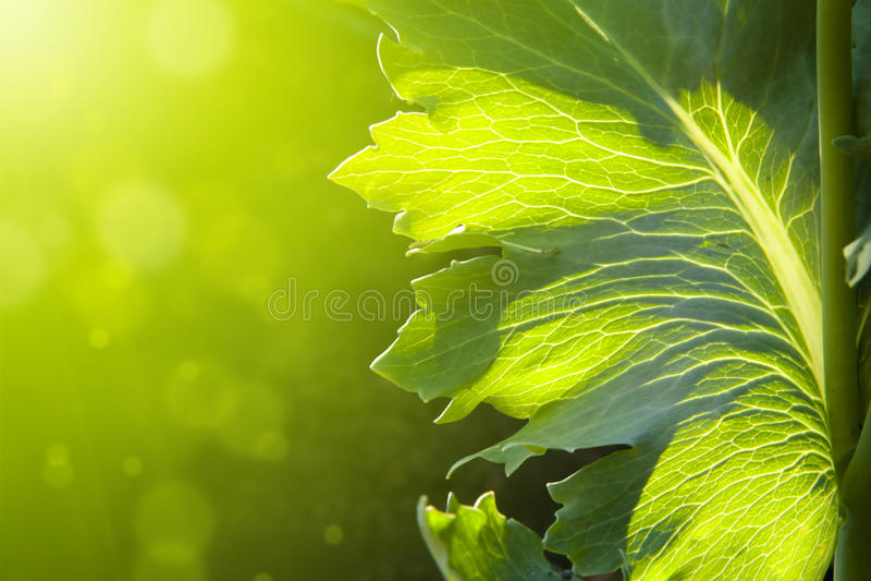 De abstracte Achtergrond van de de lentebloem stock foto