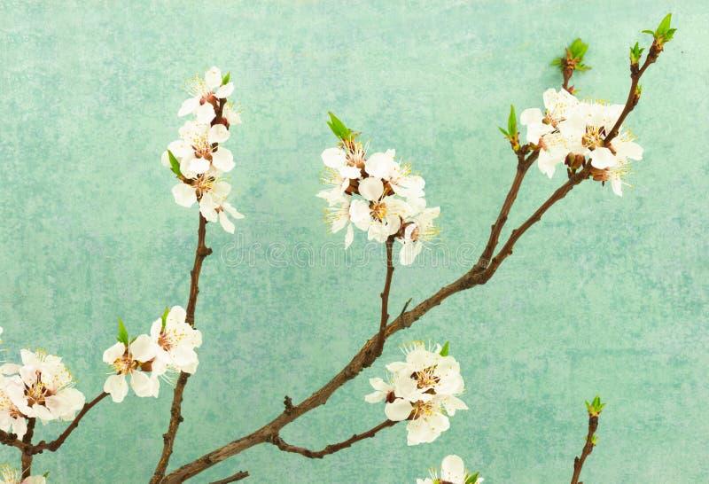 De abstracte achtergrond van de de lentegrens met bloeiende tak stock afbeelding