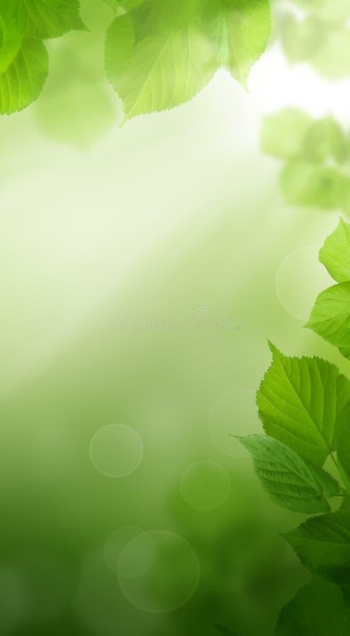 De abstracte Achtergrond van het de Lente Groene Behang stock fotografie