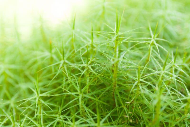 De abstracte achtergrond van het landbouwbedrijfgebied, versheids groen gebladerte stock foto