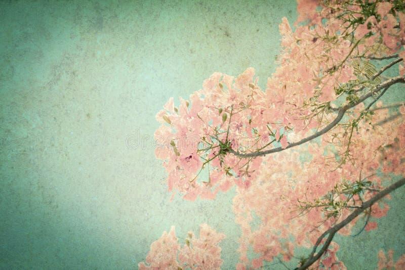 De Abstracte die retro achtergrond van Flam-boyant of pauwbloemen door grungetextuur worden gefiltreerd royalty-vrije stock afbeelding