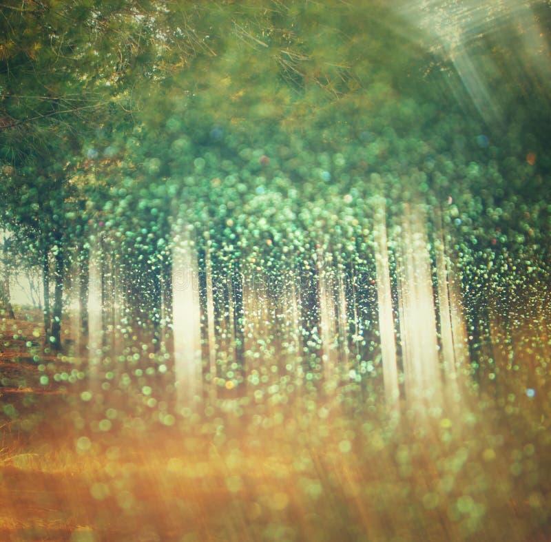De abstracte foto van licht barstte onder bomen en schittert bokeh lichten het beeld is vaag en gefiltreerd Dubbele blootstelling royalty-vrije stock foto