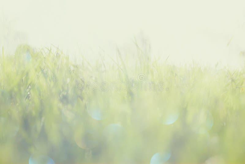 De abstracte foto van licht barstte onder gras en schittert bokeh lichten het beeld is vaag en gefiltreerd royalty-vrije stock fotografie