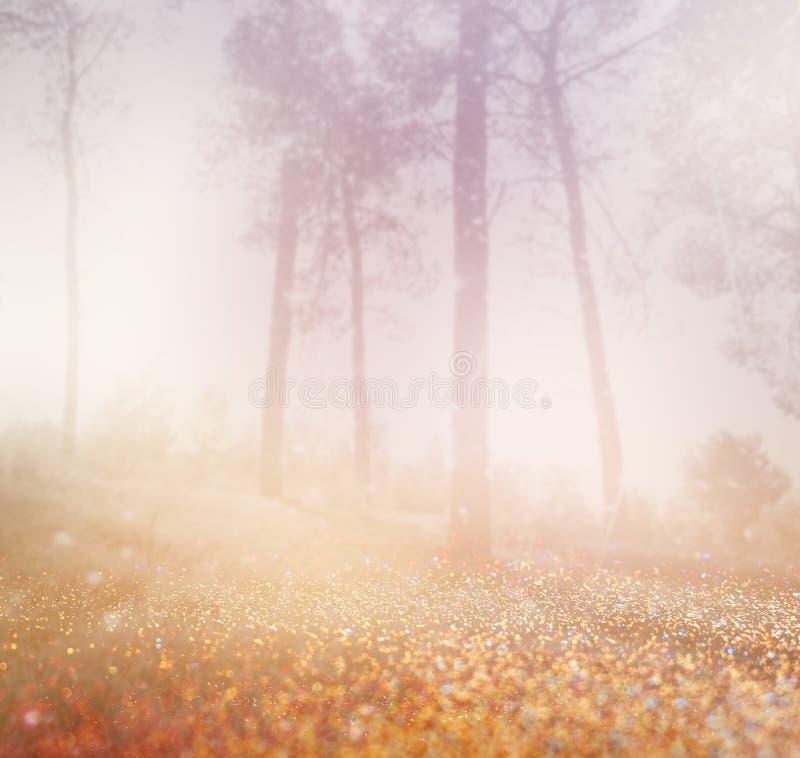 De abstracte foto van nevelig licht barstte onder bomen en schittert bokeh lichten het beeld is vaag royalty-vrije stock afbeeldingen