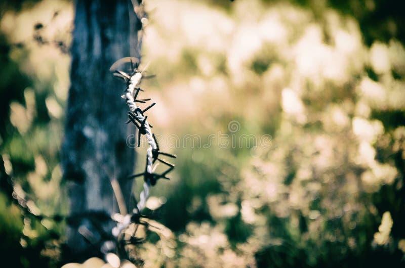 De Abstracte illustratie van het prikkeldraad stock foto
