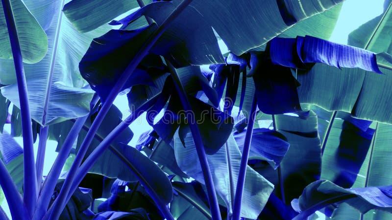 De abstracte kleur van het van achtergrond banaanbladeren Tropische boomneon royalty-vrije stock fotografie