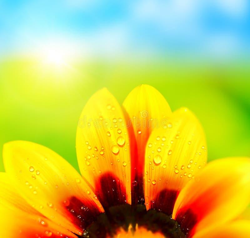 De abstracte kleurrijke achtergrond van bloembloemblaadjes stock afbeelding