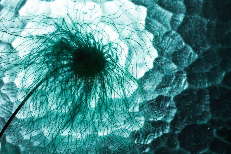De abstracte macrofoto van installatiezaden kijkt als paardebloem royalty-vrije stock fotografie