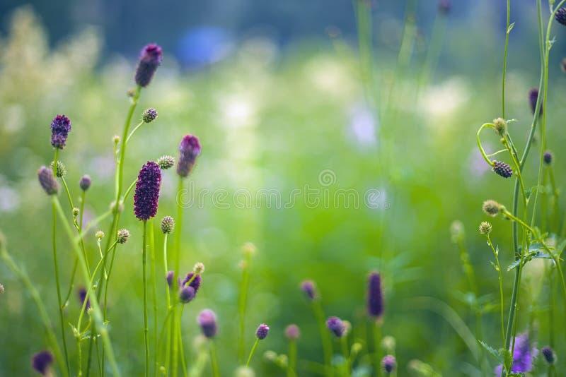 De abstracte mooie zachte achtergrond van de de lentebloem royalty-vrije stock afbeelding