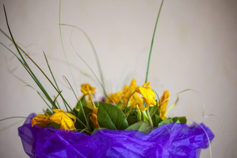 De abstracte mooie zachte achtergrond van de de lentebloem De bloem van de tulp royalty-vrije stock fotografie