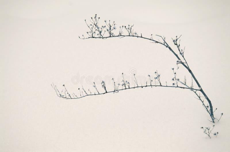 De abstracte Tak van de de Wintersneeuw royalty-vrije stock fotografie