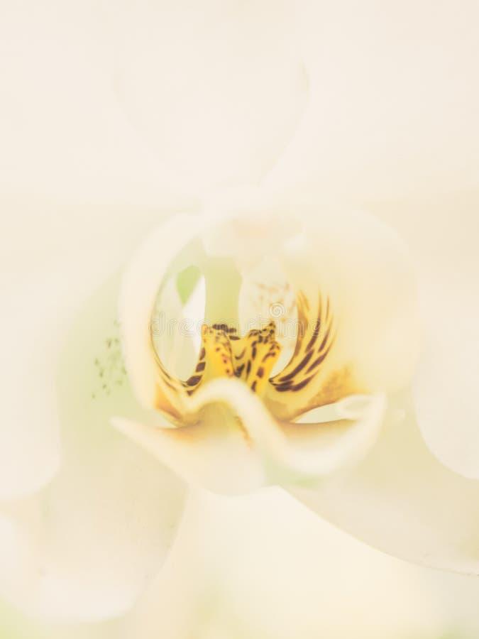 De abstracte witte bloem aard van de achtergrondclose-up mooie orchidee stock foto's