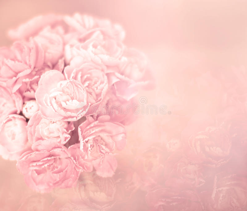 De abstracte zachte zoete roze bloemachtergrond van anjer bloeit royalty-vrije stock foto's