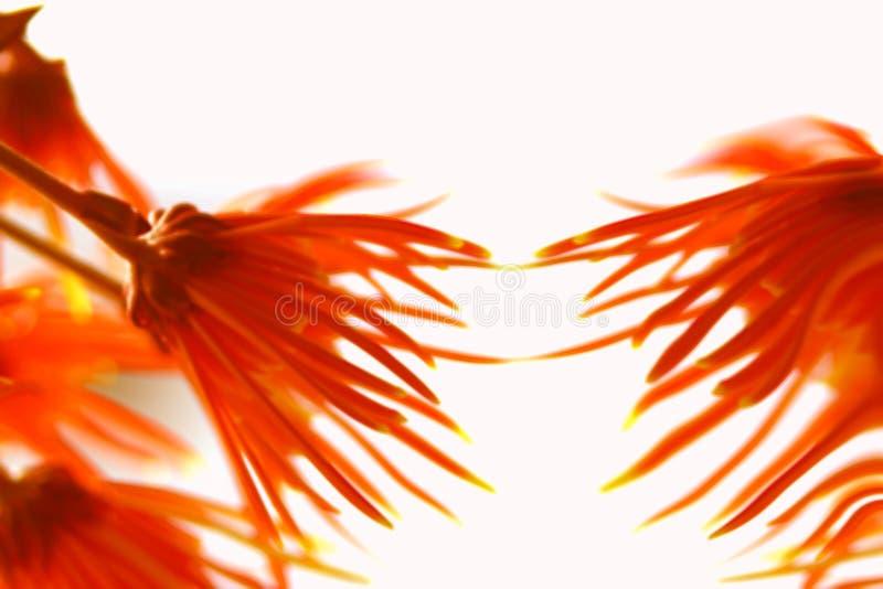 De Abstractie van bloemen royalty-vrije stock foto