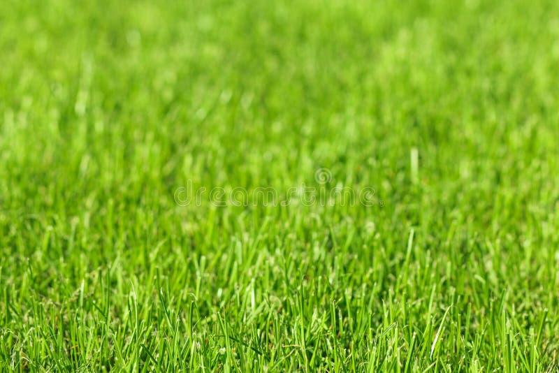 De achtergrond bebouwde een groen gras royalty-vrije stock foto
