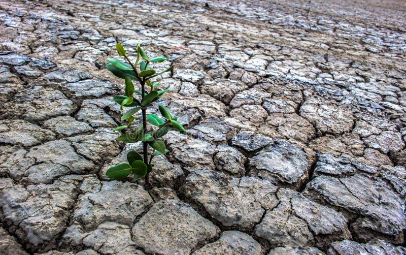 De achtergrond onvruchtbare grondbomen regenereren royalty-vrije stock foto's
