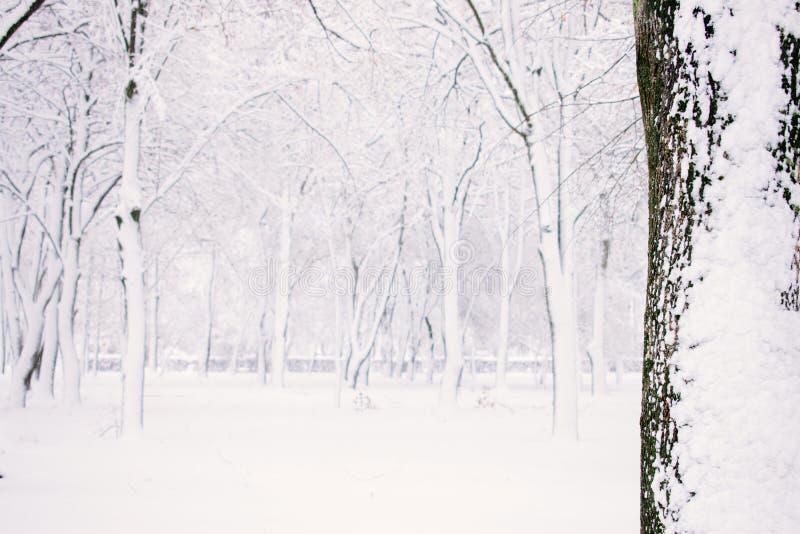 De Achtergrond van de Aard van de winter De winterbos, park met sneeuwbomen Kerstmistak en klokken Selectieve nadruk stock foto's