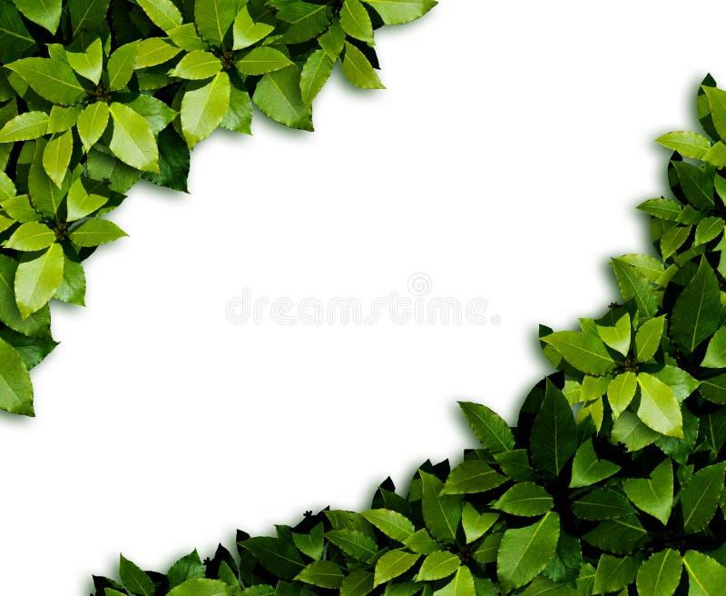 De achtergrond van bladeren stock fotografie