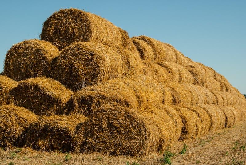 De achtergrond van de blauwe hemel en het gele stro, het de zomerlandschap, het oogsten zal ideaal gezien de achtergrond van insc stock afbeelding