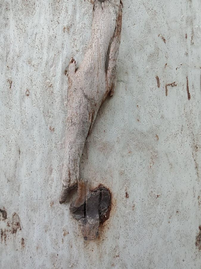 De achtergrond van de boomtextuur met omaeffect, geweven behang als achtergrond royalty-vrije stock afbeelding